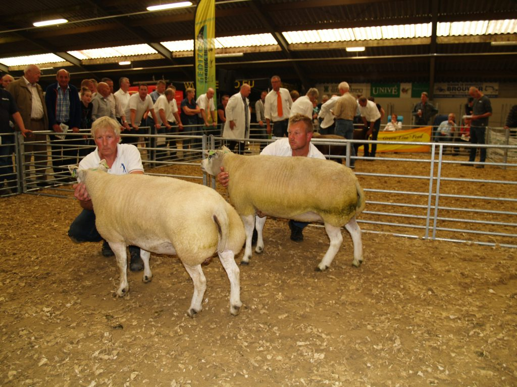 Saturday 24th of August -2019  National show of Texel sheep in the Netherlands