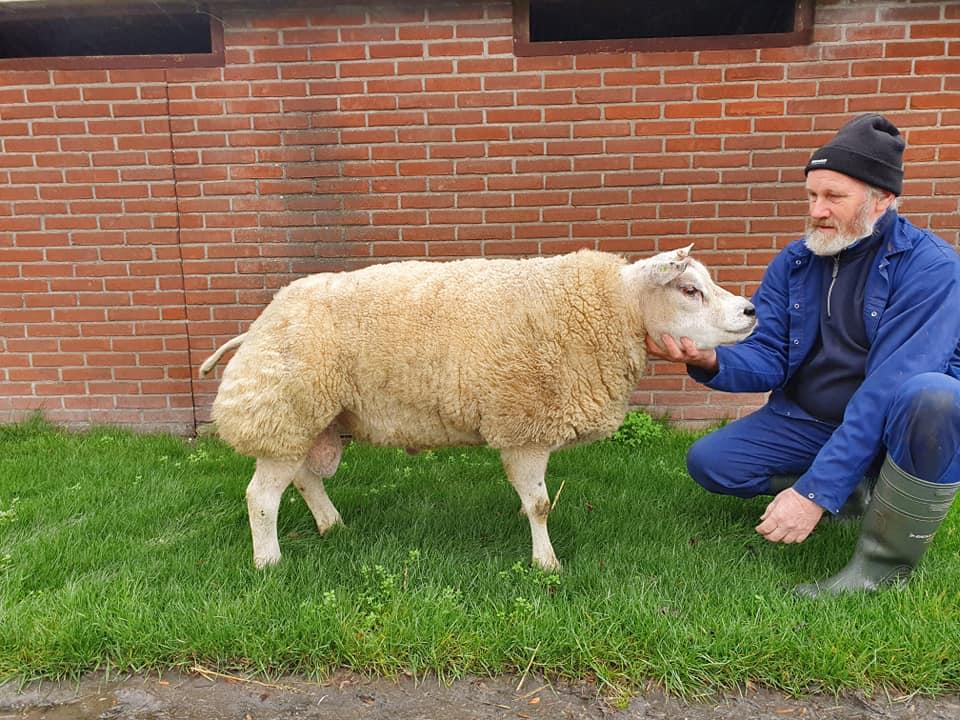 Ram NL00021-98061   A ram