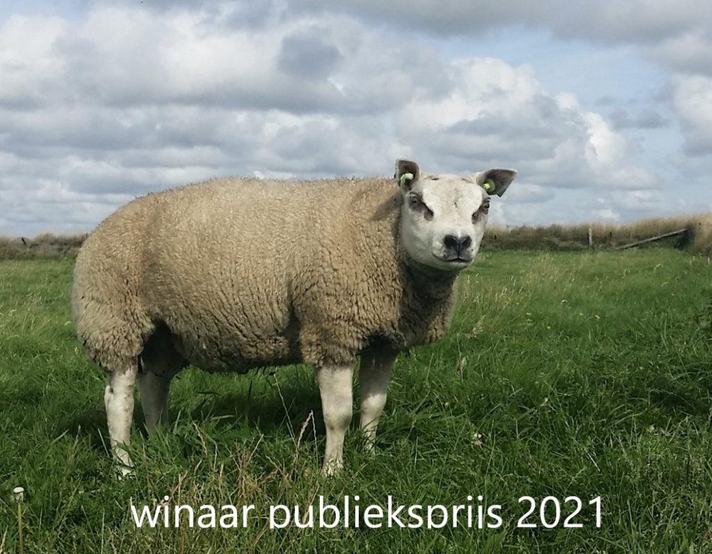 Uitslag Texelaar online show 2021